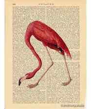 Pink Flamingo Art Print on Antique Book Page Vintage Illustration Birds