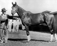 1948 Triple Crown Horse CITATION Glossy 8x10 Photo Glossy Thoroughbred Print