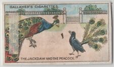 The Jay and the Peacock  Aesop's Fable Moral Story 1920s  Ad Trade Card