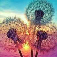 DIY 5D Diamond Painting Kits Full Drill Embroidery Cross Stitch Dandelion Home