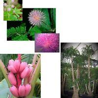 jetzt noch Sparen beim Samenkauf: 3 super-schöne Zimmerpflanzen im Sparset !