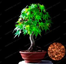 Maple Tree Bonsai Acer Palmatum Thunb Plants Green Leaf Garden 20 Pcs Seeds 2020