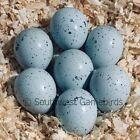 30+ Celadon (Blue-Egger) Coturnix Quail Hatching Eggs