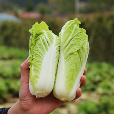 10 grams(800+pcs) Baby Chinese Cabbage seeds High yield  easy to sow Green Food