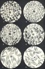 CLOVER SEEDS.Alsike;Yellow;White;Red Grasses;Crested Dog's-tail;Cocksfoot 1912