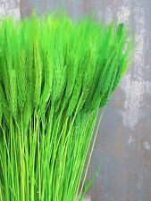 100 STEMS DRIED WHEAT/RYE FOR FLOWERS ARRANGING READY TO USE GREEN BOUQUET 20""
