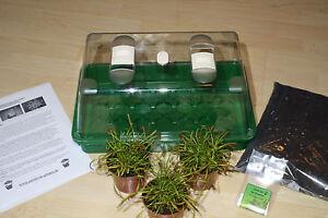 Fleischfressende Pflanzen komplett Set, 3 Pflanzen und 100 Samen!- Kap Sonnentau