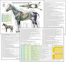 Horse Equine Acupuncture Meridian Points Chart