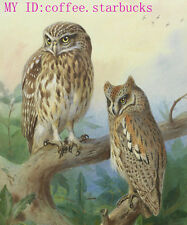 """Art Repro oil painting:""""Two Owl at canvas"""" 24x36 Inch"""