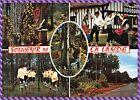 Carte Postale Souvenir de la Lande