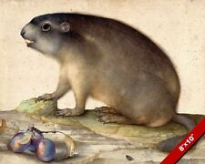 MARMOT ANIMAL RODENT WITH PLUMS FRUIT PAINTING ART REAL CANVAS GICLEE PRINT