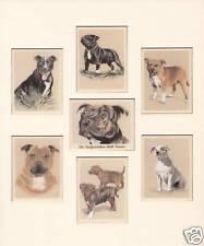 """Die Staffordshire Bull Terrier Collectors Card Set passend für 12"""" x 10"""" Frame S..."""