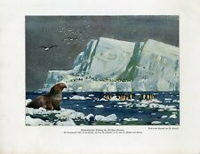 c1900 ANTARCTICA SOUTH POLE ICEBERG ELEPHANT SEAL PENGUINS Litho Print W.Bolsche