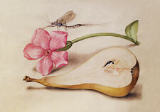 Circa 1592 Flemish Botanical Watercolor Painting Flowers Fruit Fine Canvas Print