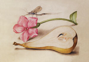 Circa 1592 Flemish Botanical Watercolor Painting Flowers Fruit Canvas Print A4