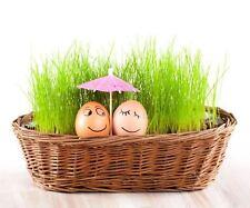 1x bag of Easter grass seeds ornamental basket plant table home patio balcony