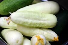 White Wonder Cucumber Seeds, Ivory King, White Albino, NON-GMO, FREE SHIPPING