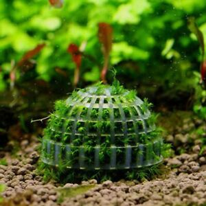 Aquatic Pet Supplies Decorations Marimo Moss Ball Plants Filter Tank Pet Product