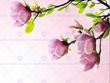 PHOTO PLANT NATURE FLOWER TREE BLOSSOM MAGNOLIA SPRING PINK PRINT BMP10926