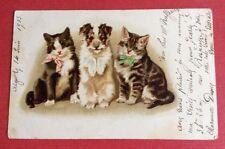 CPA. 1903. Petit Chien. Deux Petits Chats. Illustrateur Helena Maguire ?
