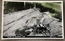 RPPC Wisconsin WI Scene at Shawano spotted Bobcat pointed ears C1930s