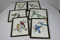 Vintage Framed 1978 Collector's Portfolio of Song Birds Prints by Sherm Pehrson