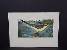 BIRDS, ERIC FITCH DAGLISH, Engraving, c. 1948 Yellow Wagtail #10