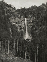1929 JAPAN Original Photo Gravure NACHI WATERFALL Mountain Landscape Art FELLNER