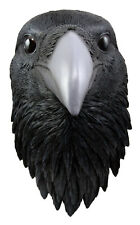 """Large Black Raven Crow Scavenger Bird Bust Wall Plaque 14.5""""H Taxidermy Decor"""