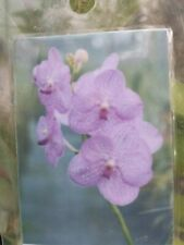 Orchid Vanda Veeraphandhu Glory x Beauty Mad Happenings Special Plant