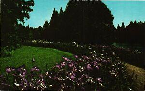 Vintage Postcard - Flowers At Swan Lake Gardens Sumter South Carolina SC #5486