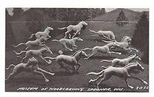 STAMPEDING Running HORSES B&W Museum WOOD CARVING Spooner Wisconsin Postcard
