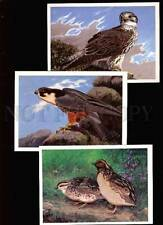 Birds Collectable Animal Postcards