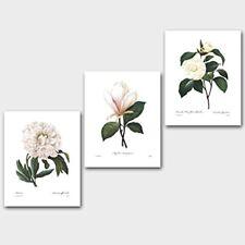 (Set Of 3) Botanical Prints (White Home Decor, Redoute Flower Wall Art) Camellia