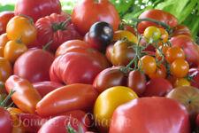 collection de 100 variétés de tomates rares anciennes modernes de votre choix