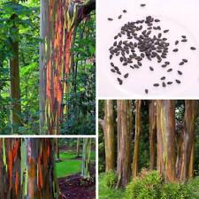 Rainbow Eucalyptus 50 Seeds *Eucalyptus Deglupta*Rare Exotic Seeds DE