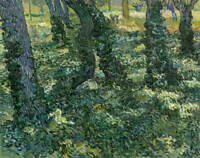 Vincent Van Gogh Undergrowth Poster Reproduction Paintings Giclee Canvas Print
