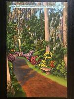 Vintage Postcard>1930's>Early Cypress Gardens>Winter Haven>Florida