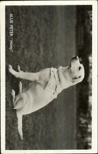 Seeing Eye Dog For Blind Yellow Labrador Retriever Lab Dog BLUE PETER RPPC