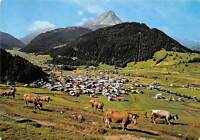 Nauders in Tirol Gesamansicht Cows General view Village