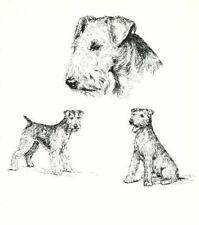 Welsh Terrier - 1963 Vintage Dog Print - Matted