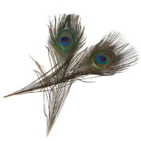 10pc Natural Plume Peacock Eye Feathers Long Tail for Bouquet DIY Party Decor