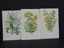 Anne Pratt Botanical, c.1899, Original Color, 3 Prints! English #37