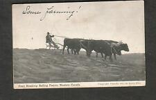 post card Oxen Breaking Rolling Prairie Western Canada/Phila 1912 - West Chester