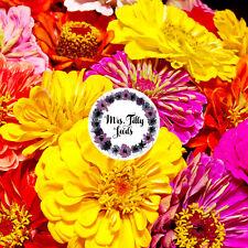 Zinnien DAHLIA Mischung Bunte Blüten 100+  Samen Bauerngarten Blumensamen