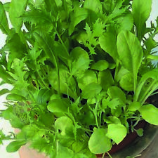 Kings Seeds-Baby Leaf Mixta oriental Hojas - 200 semillas