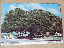 Postcard: Moreton Bay Fig Tree, Santa Barbara. Vintage