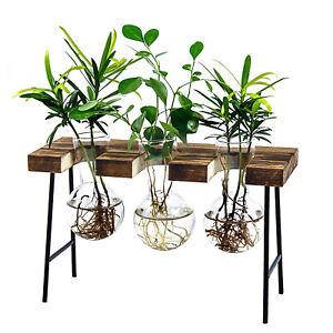 Air Plant Terrarium,Desktop Glass Planter Bulb Glass Vase with Wooden Stand
