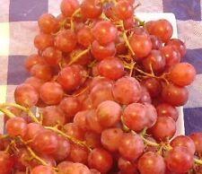 "Red Globe ""do it all"" Grape Vine 2 gallon Live Plant Home Garden Easy to Grow"