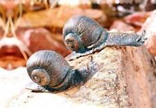 Gartenfiguren & -skulpturen aus Bronze mit Tier-Thema